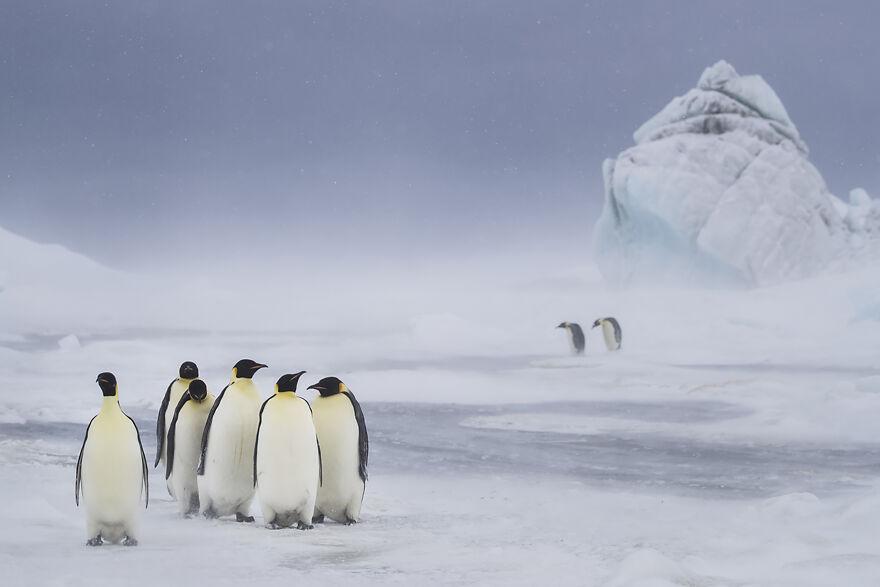 Cuộc thi Nhiếp ảnh đại dương 2021: Những góc nhìn khác về môi trường biển - Ảnh 42