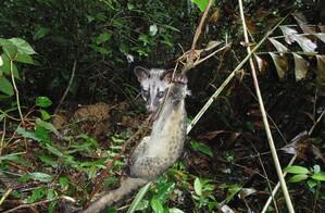 Việt Nam trong cuộc chiến bảo vệ động vật hoang dã