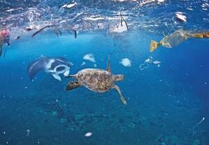 Đại dương đang 'chết dần' vì ô nhiễm