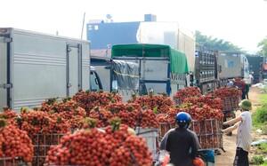Chính phủ chỉ đạo ưu tiên cho việc vận chuyển vải thiều