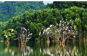 Phục hồi hệ sinh thái rừng là bảo vệ tài nguyên vô giá