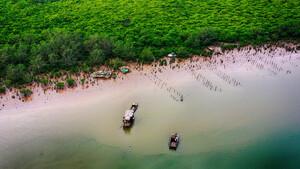 UNESCO cam kết hỗ trợ các giải pháp về bảo tồn rừng ngập mặn