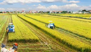 Xu hướng 'xanh' trong canh tác lúa và cây trồng quan trọng ở Việt Nam