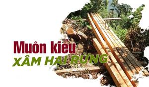 Muôn kiểu xâm hại rừng (Kỳ 7): 'Giơ cao đánh khẽ' khiến cây rừng bật gốc