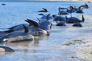 IPCC: Tình trạng nóng lên toàn cầu đang hủy hoại các đại dương