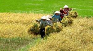 Đề xuất giải pháp giảm độ mặn cho đất nông nghiệp vùng ĐBSCL