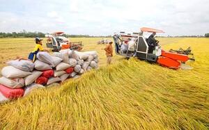 Năm 2020, Việt Nam sẽ là quốc gia xuất khẩu gạo hàng đầu thế giới
