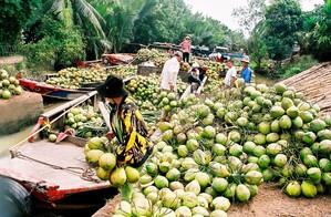 Đưa Bến Tre trở thành trung tâm trái cây đặc sản vùng Đồng bằng sông Cửu Long