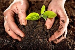 Hệ sinh thái bị đe doạ do ô nhiễm môi trường đất