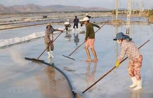 Đổi mới sản xuất và có chiến lược phát triển bền vững nghề muối