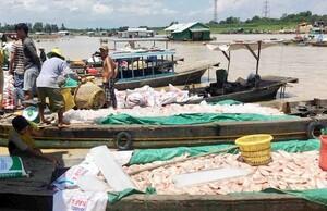 Đồng Nai: Cá lại chết trắng trên sông La Ngà